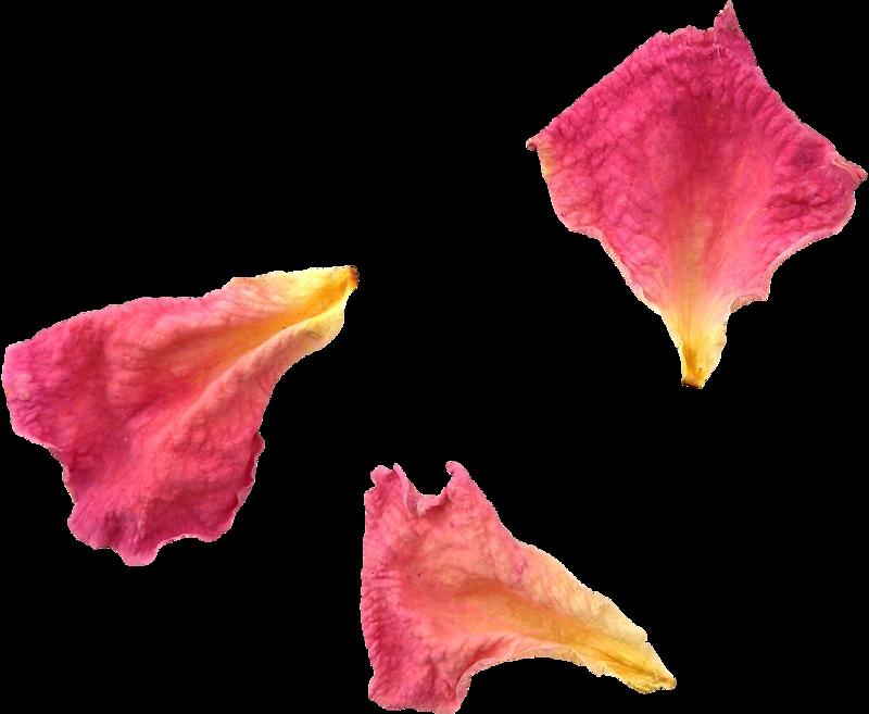lepestki