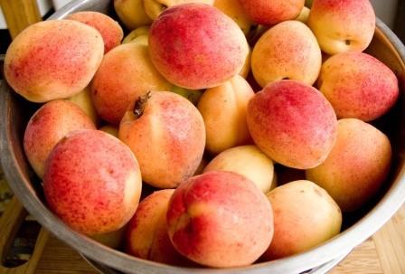 abrikosa (5)