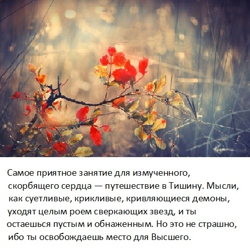 tishina_2
