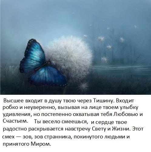 tishina_3